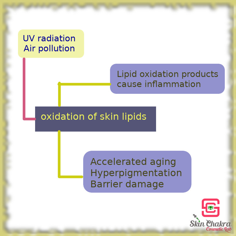 impact od UV radiation and air pollution on skin lipids