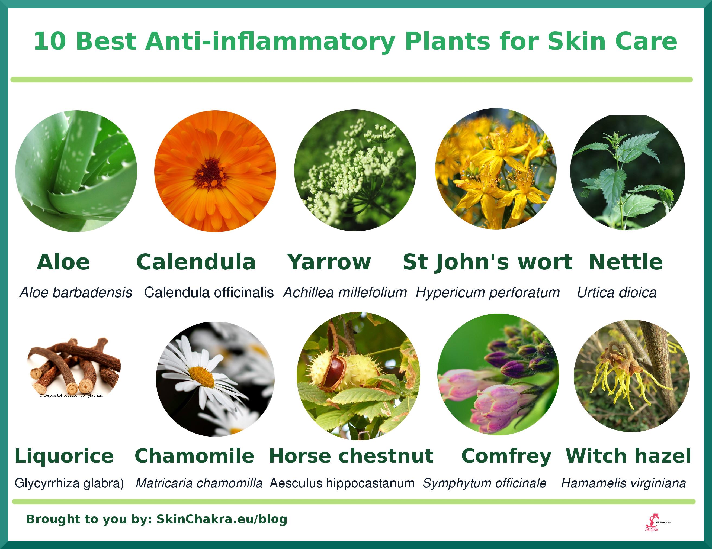 Best Natural Anti Inflammatory For Skin
